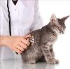 Ветеринарные клиники в Карпунинском